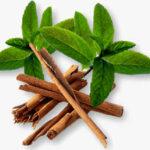 Cinnamon-Leaf