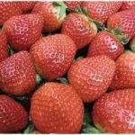 strawberry-oil