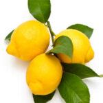 lemon-verbena-fragrance
