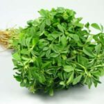 Natural-Fenugreek-Seed-Oil