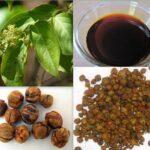 Pure-Malkangni-Seed-Oil