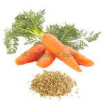 organic carrot seed oil