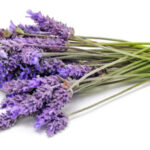 Lavender-Fragrance-Oil