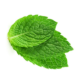 Mint Fragrance Oil