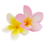 frangipani-absolute