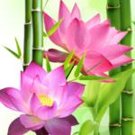 Lotus Flower Essential Oil